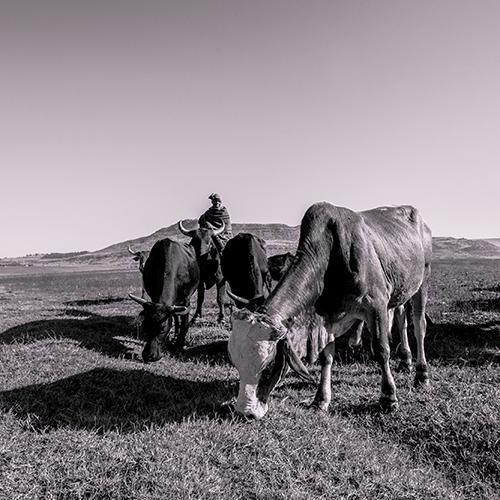 UNWomen - Lesotho Cattle Herders - Documentary Photography